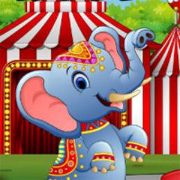 4×4 Circus