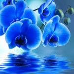 Profile picture of Blue.Orchid