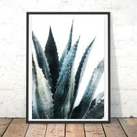 Profile picture of Aloe Vera